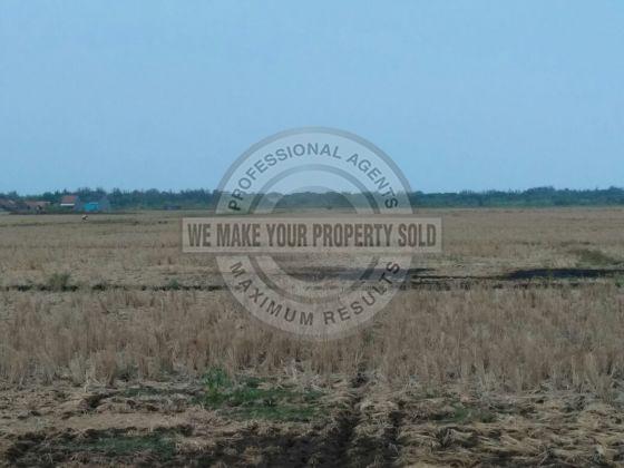 tanah-murah-cocok-untuk-perumahan